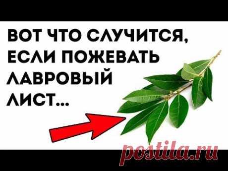 ВЕЛИКАЯ СИЛА ЛАВРОВОГО ЛИСТА. 9 уникальных применений для здоровья!