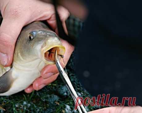Приманка из манки. 3-й способ приготовления | Рыбалка для людей | Яндекс Дзен