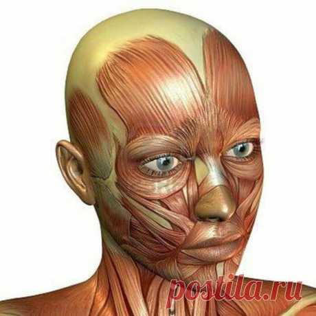 Подтягиваем лицо! Упражнения-невидимики, которые можно делать в любое время в любом месте | ECONET.ru | Яндекс Дзен