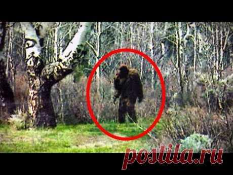 5 Crazy BIGFOOT Sightings Caught on Camera (2016)