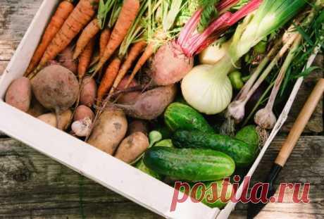Экономьте разумно! 10 способов продлить срок годности овощей и фруктов — Полезные советы