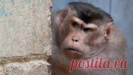 """Aplicado maydanovedenie: los científicos han aclarado, cómo a muchos monos es necesario el comienzo de \""""la revuelta\"""""""