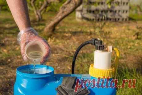 Есть нюансы: Фитоспорин-М – как правильно развести и использовать для защиты растений | Болезни и вредители (Огород.ru)