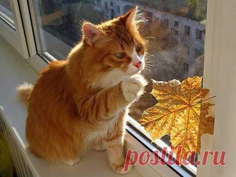 Ах, эта осень...