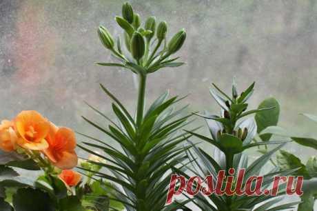 Симптомы нехватки разных веществ растениям Состояние растения можно понять по его листьям. Азот, калий, фосфор, железо, а также многие другие (бор, сера и прочие необходимые для развития растений элементы). Как при недостатке, так и при избытке элементов питания происходят физиологические нарушения. Посмотрим, как выглядит нехватка тех или иных веществ.