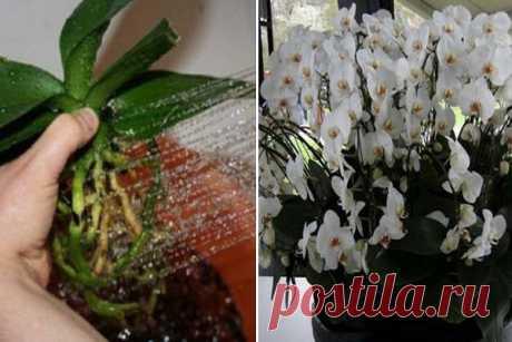 Пересадила орхидеи необычным способом… Когда гости увидели моих красавиц, ахнули! | Краше Всех