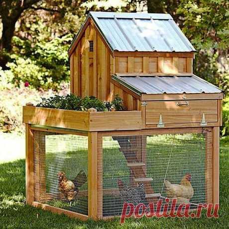 Вот идея интересного курятника для 3-4 курочек. Если у вас на даче не фабрика по производству яиц, а вы для души завели несколько курочек — это прекрасный вариант для вас.
