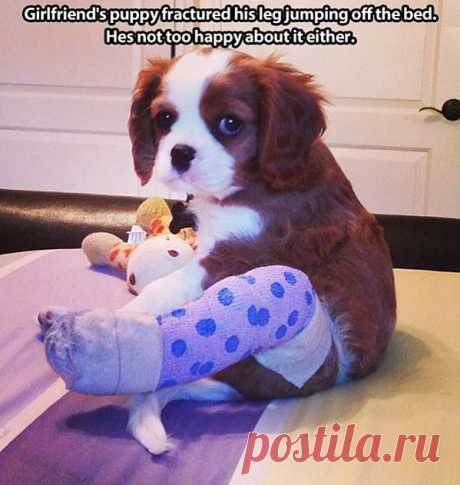 Fractured Puppy | Funny Pictures