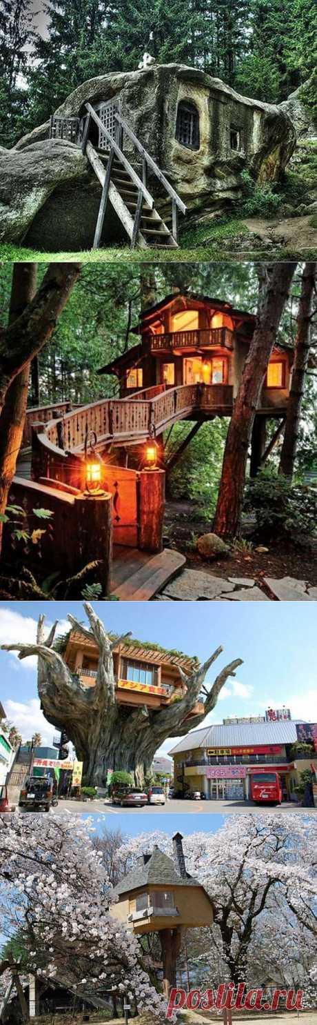 Дома на деревьях | УДИВИТЕЛЬНОЕ