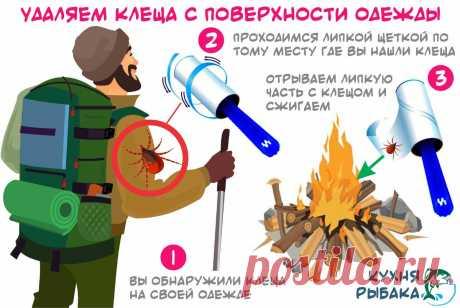 Рекомендация по извлечению весеннего клеща | Кухня рыбака | Яндекс Дзен