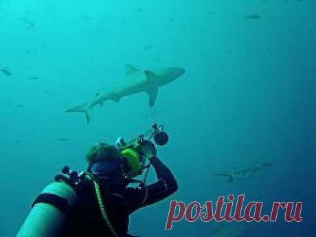 Как был изобретен акваланг? | Спорт и активный отдых