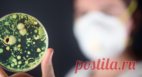 Признаки того, что в теле процветает плесень Если грибок попал в организм человека, то избавление от него – серьёзная и масштабная задача. В наших силах способствовать укреплению тела и поддержке его в задаче сохранения здоровья.