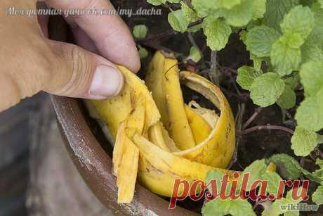Dais de comer a las flores... Por los plátanos