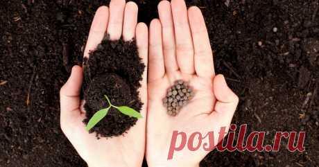 Как быстро посеять семена и рассаду на грядках! » Женский Мир