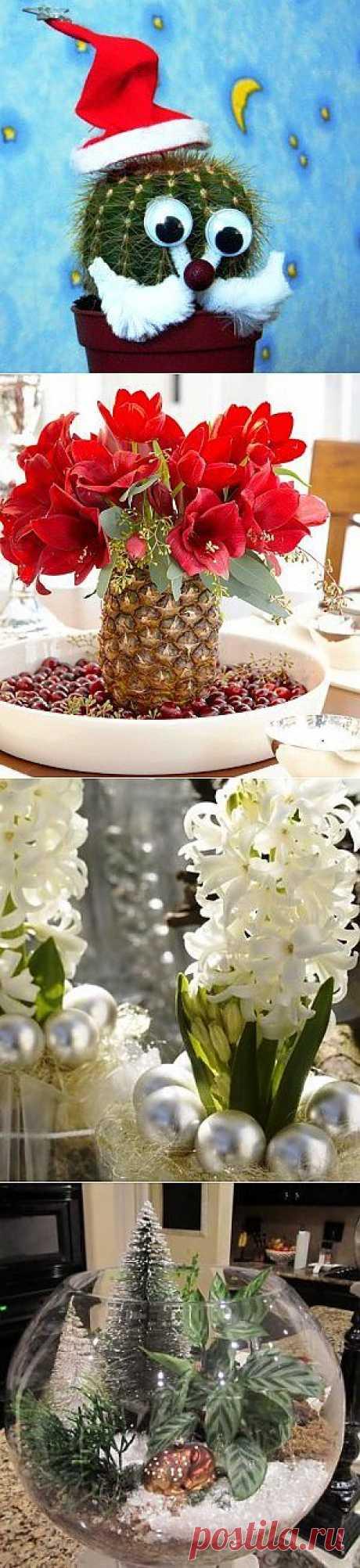 Новогодний декор из комнатных растений