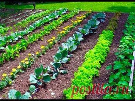▶ 1. Планировка участка. Технология изобилия урожая (по методу Миттлайдера) 2 - YouTube