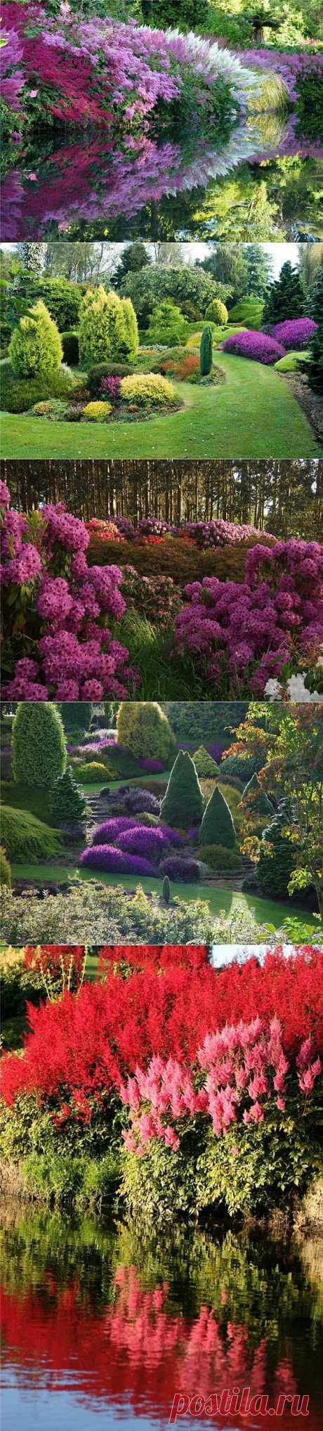 Сад долины реки Клена / Maple Glen garden   Kayrosblog.ru