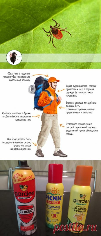 Как защитить себя и детей от клещей? Какие репеленты самые действенные и как правильно одеться в лес (из опыта) | ЁжикTravel | Яндекс Дзен