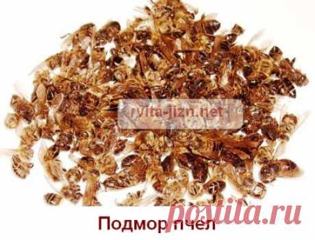 Как принимать пчелиный подмор рецепты, применение, лечение пчелиным подмором