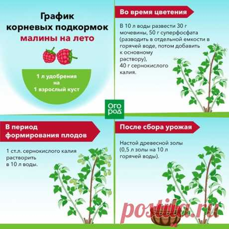 (5) Огород.ru - Публикации