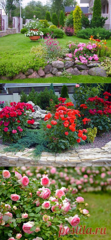 Устройство альпийской горки с розами
