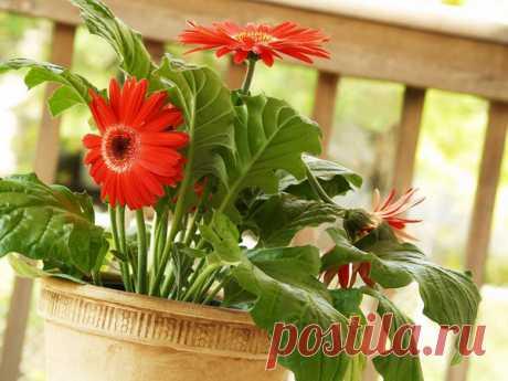 15 houseplants improving air \/ 7dach.ru