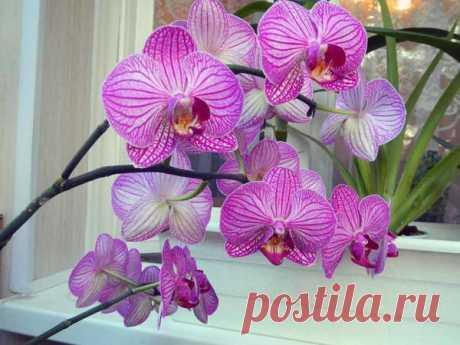 Что делать с цветоносом орхидеи после цветения, чтобы следующее наступило быстрее   Секреты сада. Дача, цветы   Яндекс Дзен