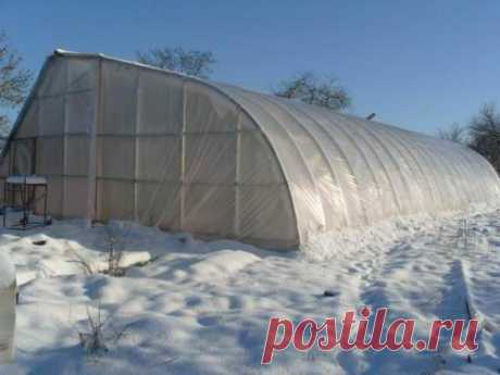 Cultivation of mushrooms in the greenhouse: general requirements, necessary equipment, general recommendations about the choice of a hotbed