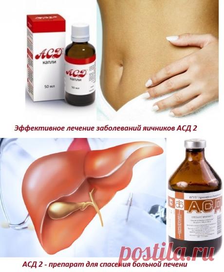 Архивы Лечение АСД - Фитотерапевта Халисат Сулейманова