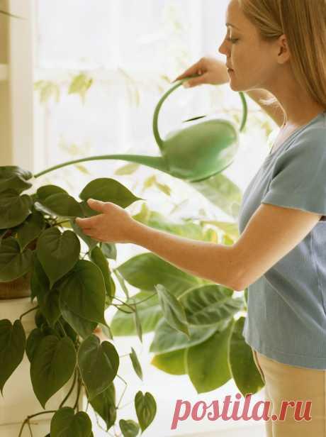 ВСЕ ДЛЯ ДОМА И ДАЧИ: Уход за комнатными растениями