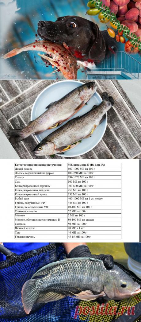🍒Имею здоровое сердце, крепкий иммунитет и сон благодаря употреблению рыбы: 10 её полезных для здоровья свойств | Живые будни 🍒 | Яндекс Дзен