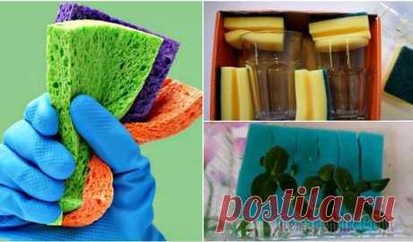 Скрытые возможности поролоновой губки, которая сгодится не только для мытья посуды