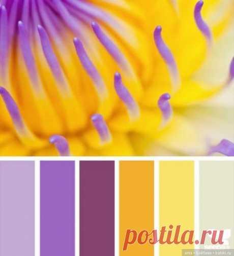 Сочетание цвета. Природа и цветы / Сочетание цвета в интерьере, одежде / Бэйбики. Куклы фото. Одежда для кукол