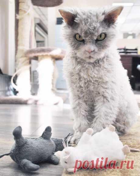 Топ 10 угарных фото котов | СуперКУСЬ - просто о кошках | Яндекс Дзен