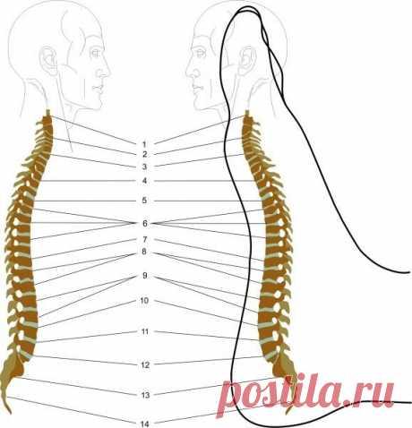 Как сделать массаж стоп, способствующий снятию болей в спине