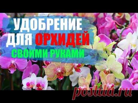 Удобрение для орхидей в домашних условиях, чесночная настойка.