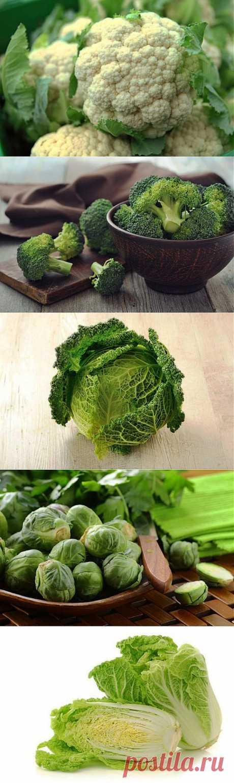 Очевидная польза восьми видов капусты