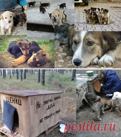 Бездомные собаки относятся к нам так , как мы того заслуживаем   Ella   Яндекс Дзен