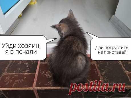 Почему грустит Ваш кот? Плачут ли кошки? Вся правда о причинах кошачьей грусти | Кошка в доме | Яндекс Дзен