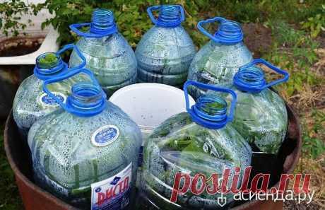 Огурцы в бутылках: Группа Наши грядки