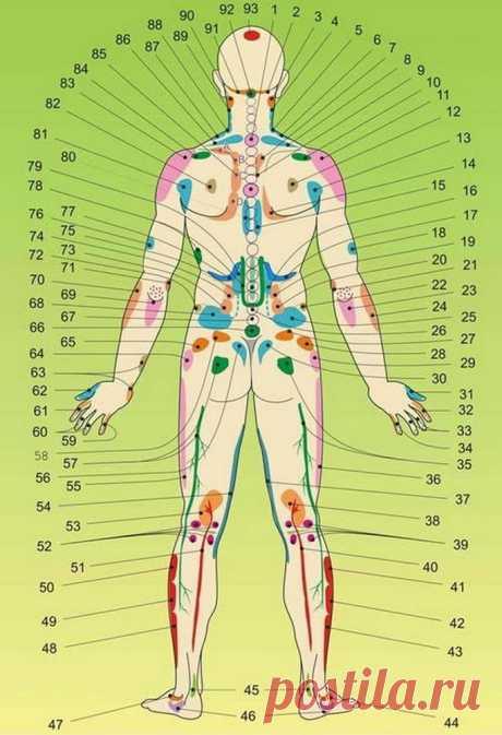 Внутренние органы на теле человека. Акупунктурные точки.