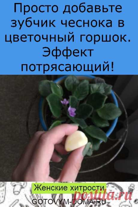 Просто добавьте зубчик чеснока в цветочный горшок. Эффект потрясающий!