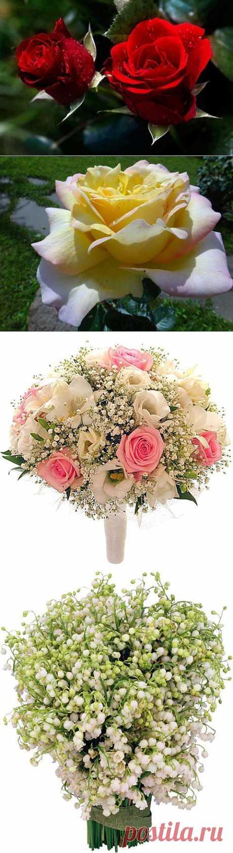 (+1) - Удивительный Мир! Живые цветы! Цветы распускаются! | УДИВИТЕЛЬНОЕ