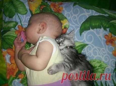 """Кот - игрушка, кот - подушка, кот - любимая подружка. Кот """"будильником"""" слывет... Спать уложит тоже кот. Как мы жили без кота? Комфортабельность не та!!!"""