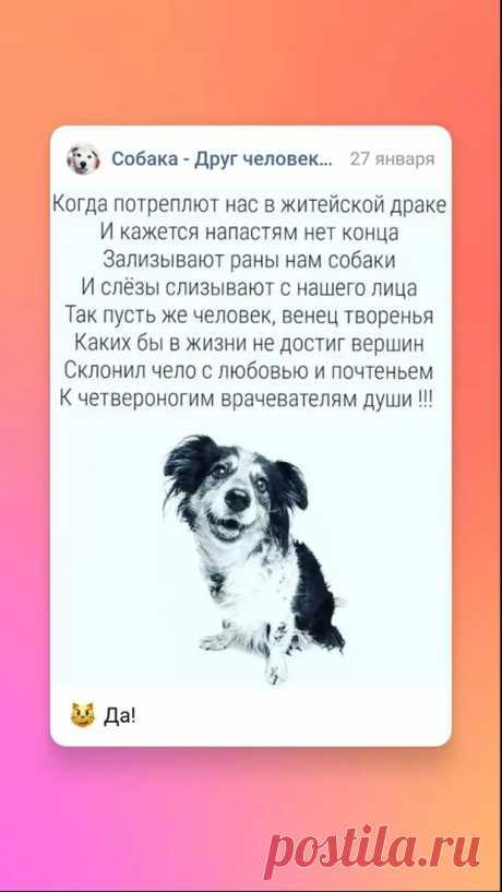 Шарик - РЖАКА - медиаплатформа МирТесен