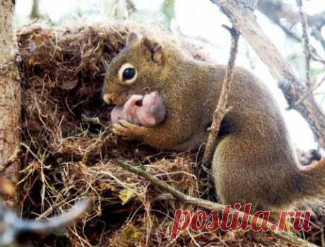 Белка с новорожденным (все мамы одинаковы, не так ли?)