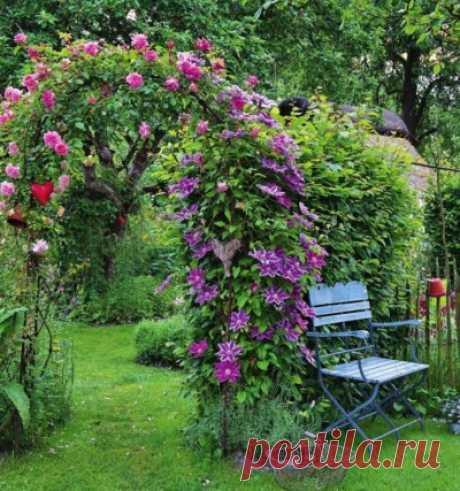 Вьющиеся цветы для украшения вашей дачи и участка: ТОП 5 вариантов Selo.Guru — интернет портал о сельском хозяйстве