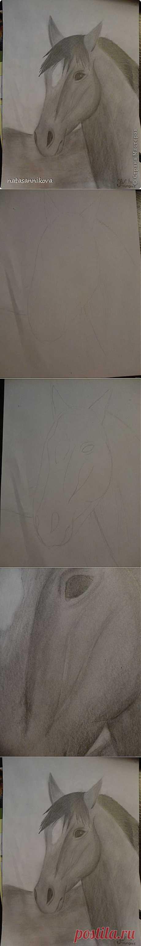 Рисуем морду ахалтекинской лошади   Страна Мастеров