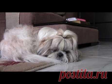 Как оставлять собаку дома   Разлука с хозяином