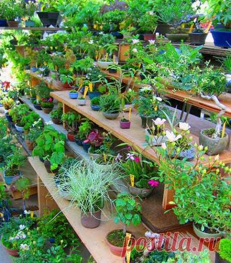 Комнатные растения. Ошибки при уходе